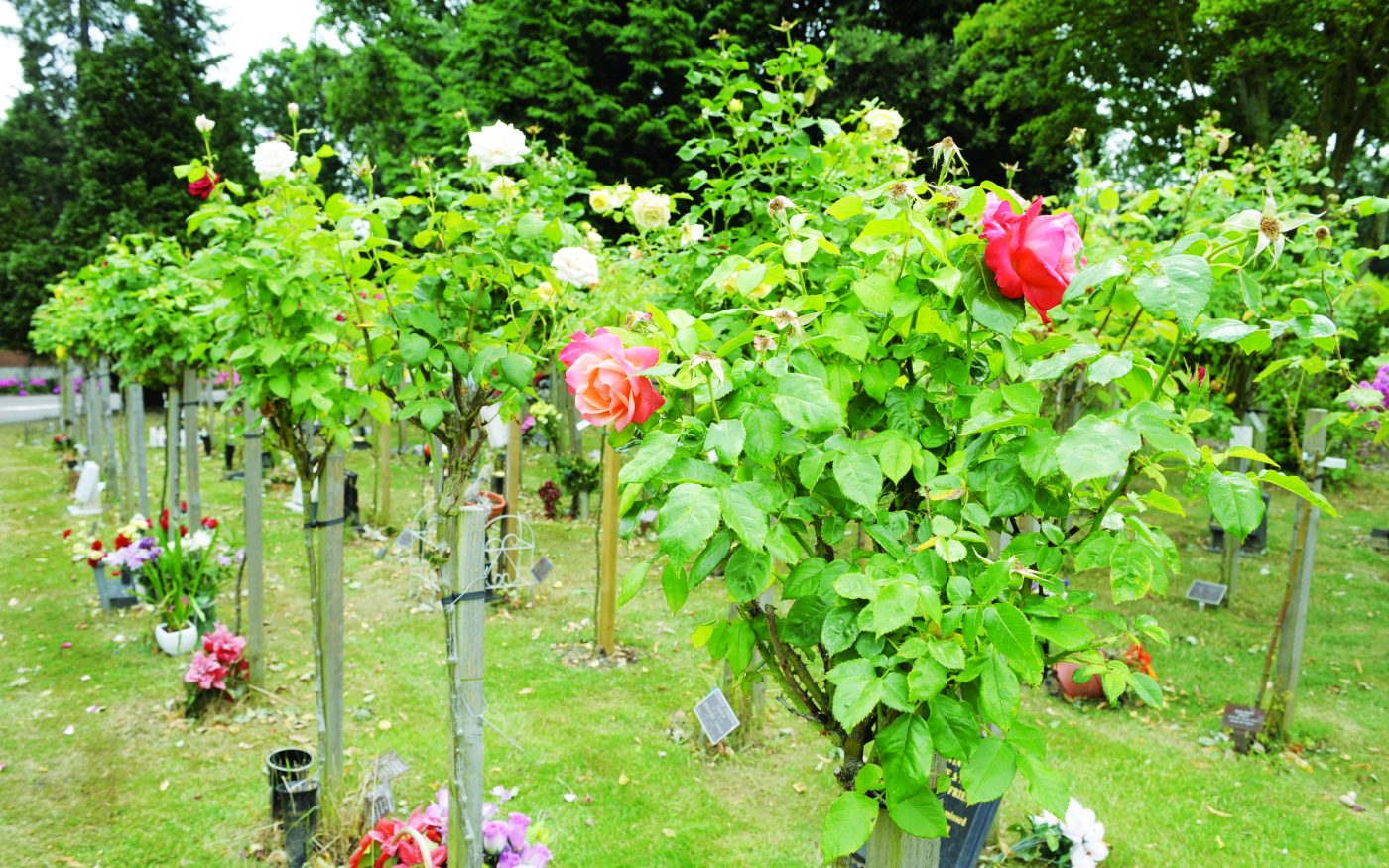 ICCS - Islington and Camden Cemetery Services
